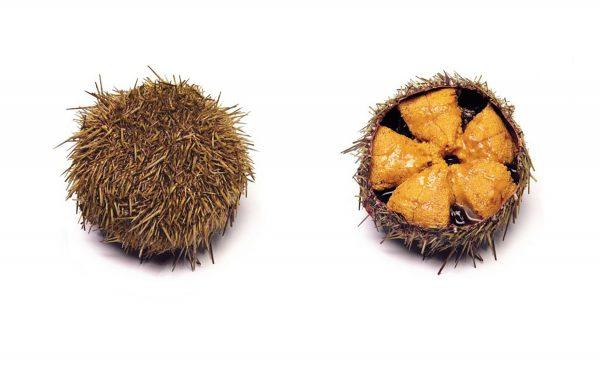 Uni. Icre de arici de mare(sea urchin caviar), caserola de 100 de grame.